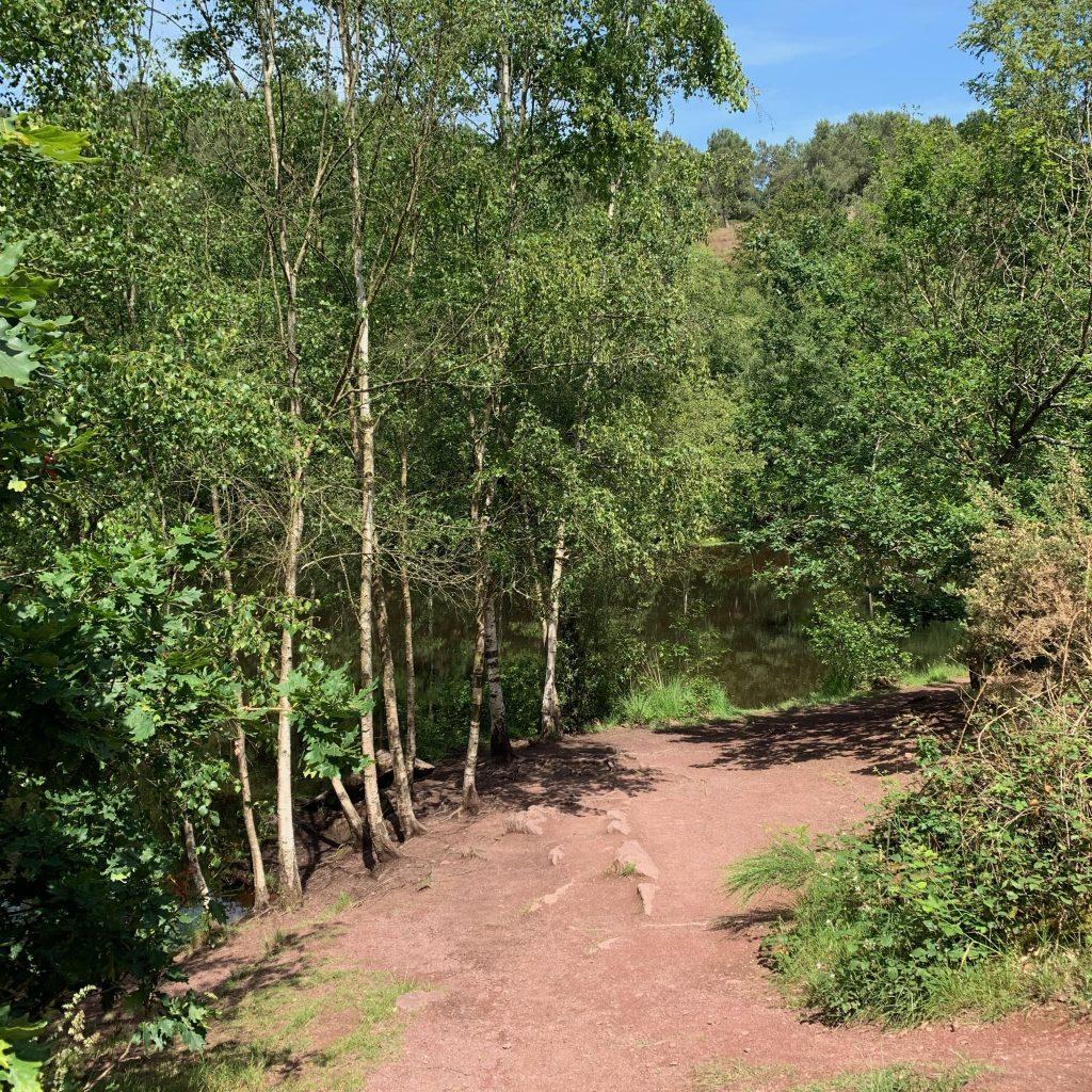 balade contée forêt brocéliande des druides bretagne
