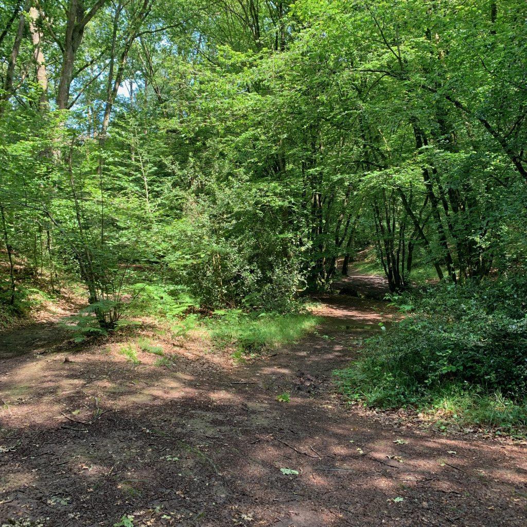 balade contée forêt des druides brocéliande bretagne