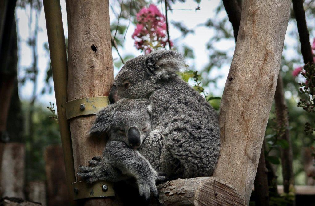 Astuces et conseils pour visiter le zoo de Beauval