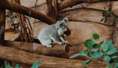Visiter le Zoo de Beauval en 1 ou 2 jours