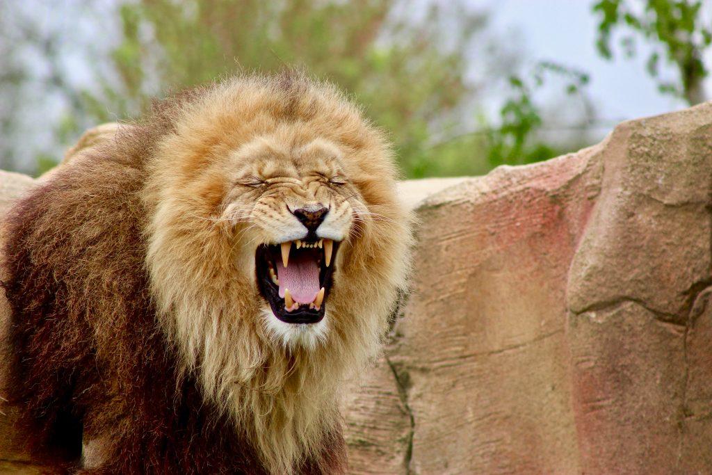 Zoo de Beauval tarif hôtel où dormir