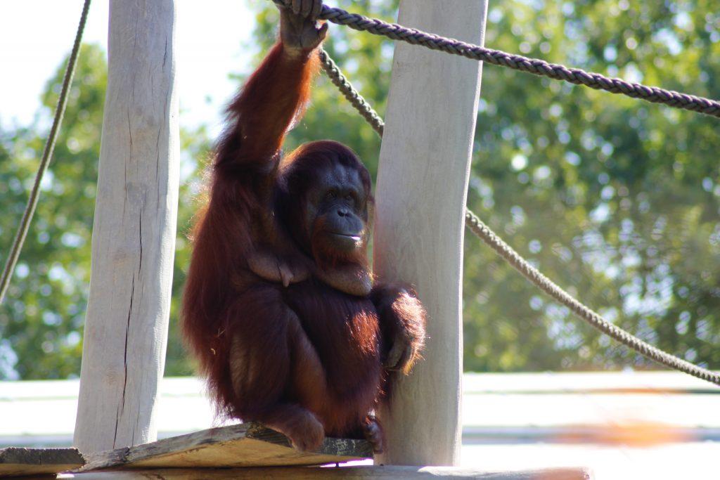 prix pour manger au zoo de Beauval
