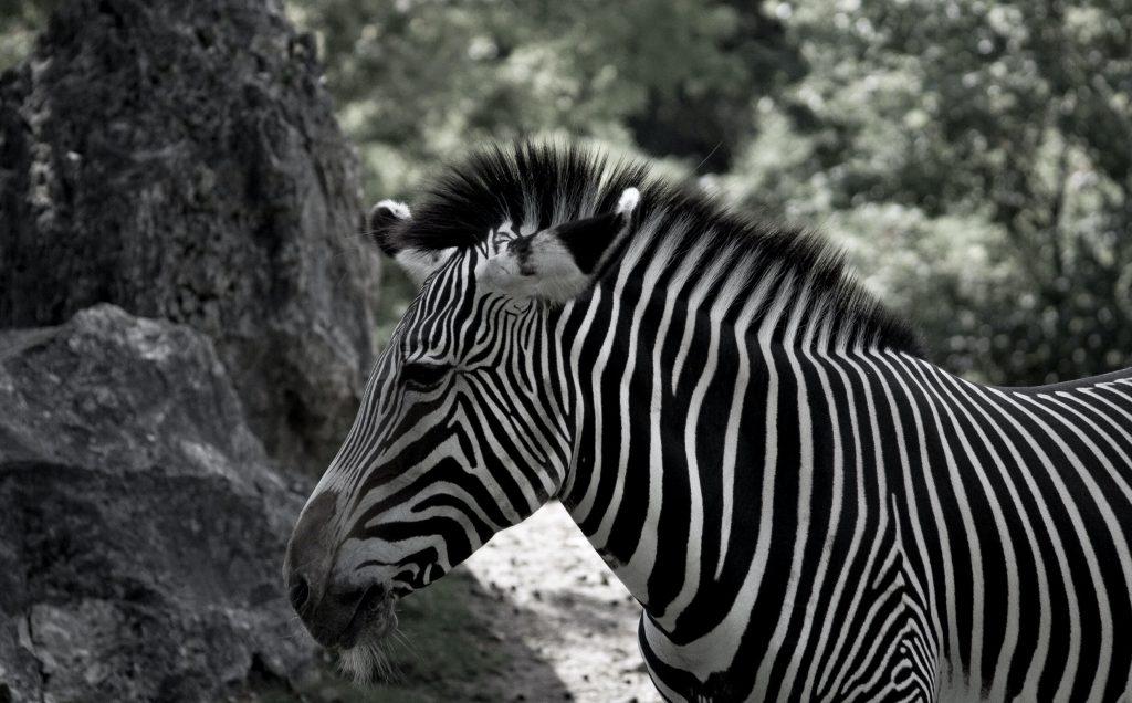 quand visiter le zoo de beauval