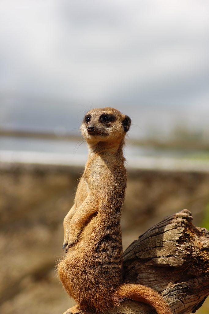zoo de beauval tarif préparer sa visite